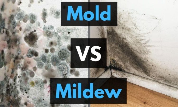 Mold and Mildew Removal | Elkhart, IN